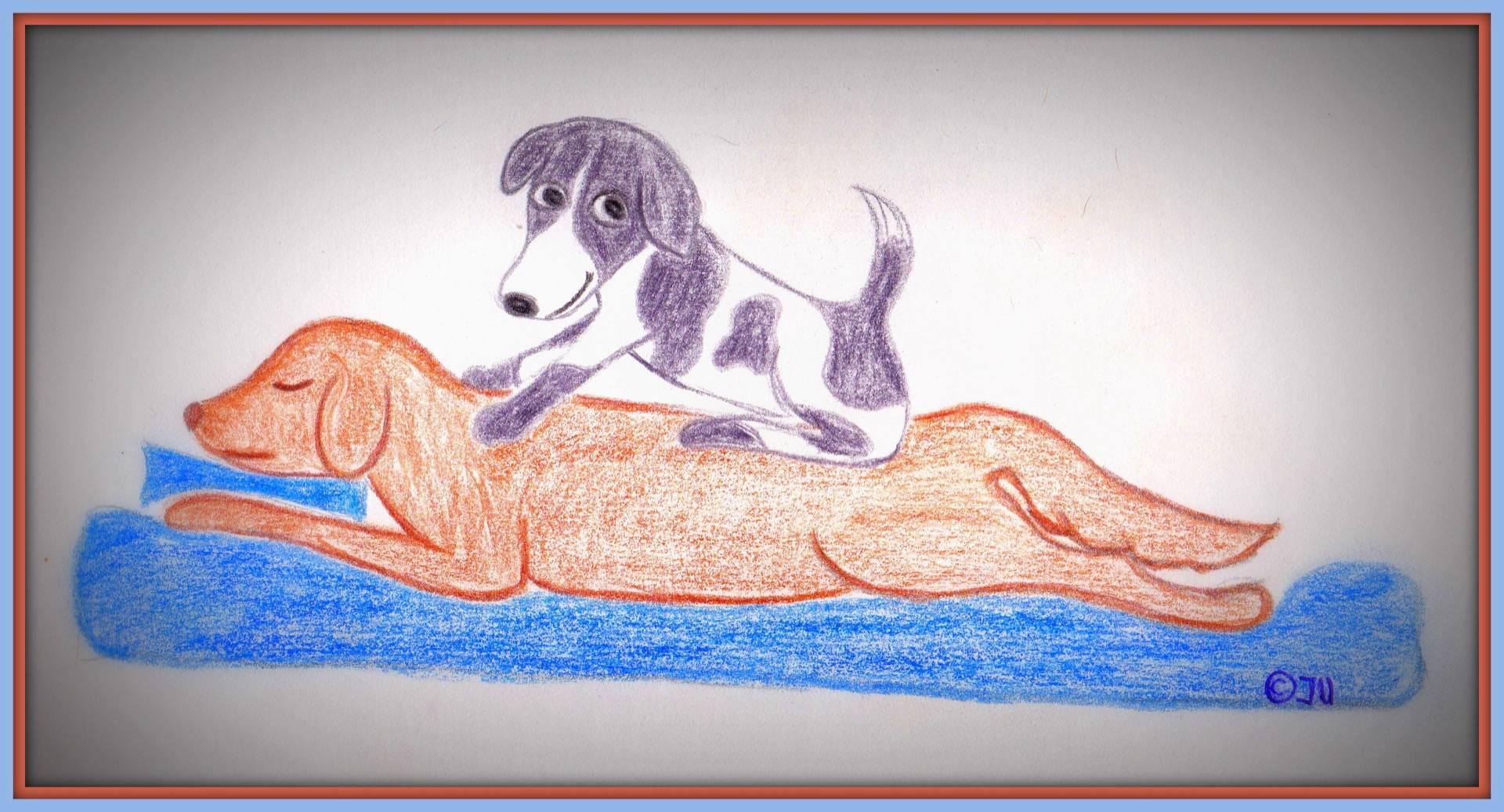 Massage am Hund -neuer Termin-