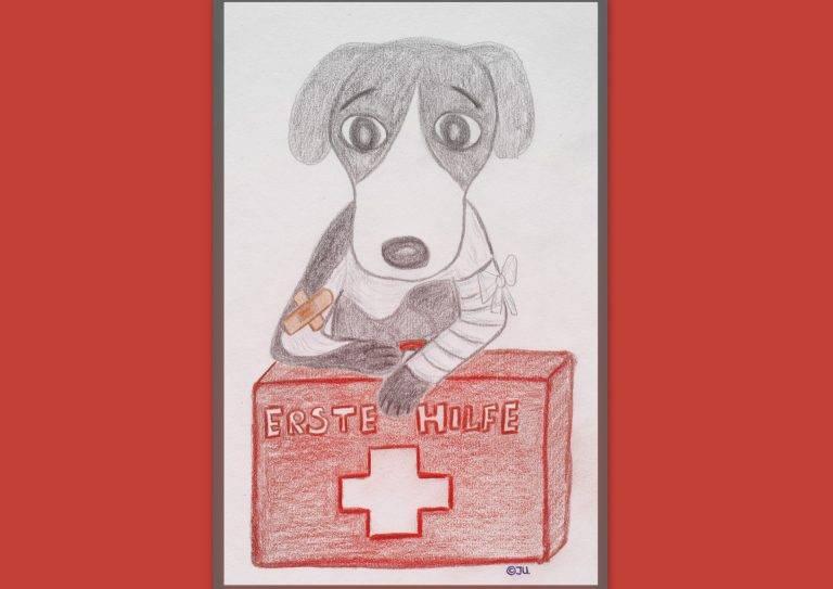 """Seminar """"Erste Hilfe am Hund"""""""
